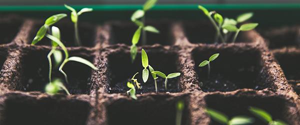 Markt für ökologischen Landbau 20192023 : Globale Wachstumstreiber, Chancen, Trends und Prognosen