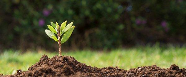 Ökologischer Landwirtschaftsmarkt 2020 Technologie, Aktie, Nachfrage, Chance, Projektionsanalyse Prognose Ausblick 2026