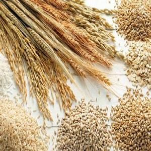 Malt Ingredients Market to Eyewitness Massive Growth by 2025   Cargill, Boortmalt, Muntons PLC
