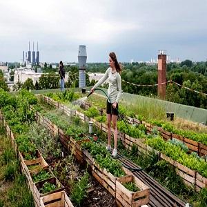Urban Farming Market Übersicht, Nachfrage, neue Chancen & SWOT-Analyse bis 2026   Metropolitan Farms, Edenworks, BrightFarms